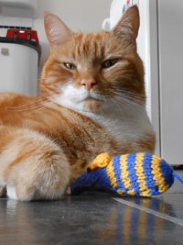 Get knitting to give unwanted cats and kittens an extra treat this Christmas